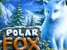 Polar_Fox_137x103
