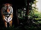 Slot_Untamed_Bengal_Tiger_137x103